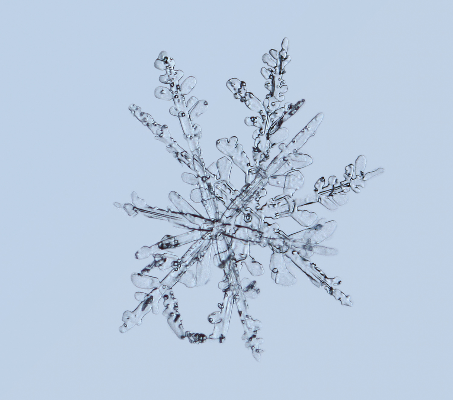 who s on top snowflakes img abcpew author sava gr gregory and verena
