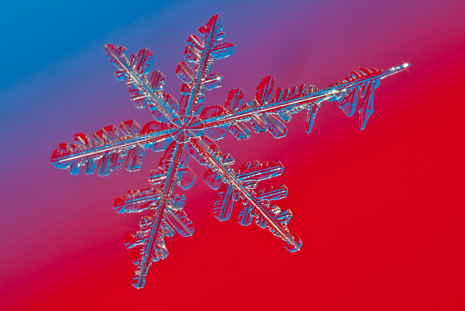 more snowflake img abw author sava gregory and ve verena