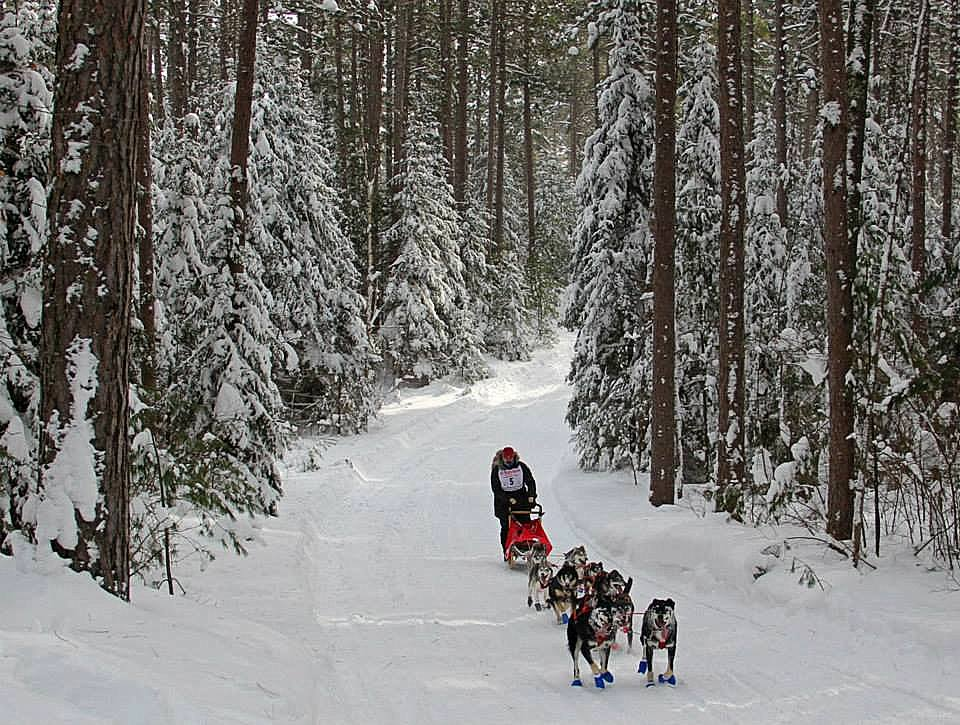 a musher and his team deep in the woods author pluskwik paul