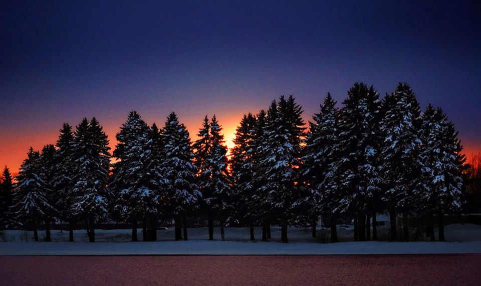 sunset glow behind the tall pines author pluskwik paul