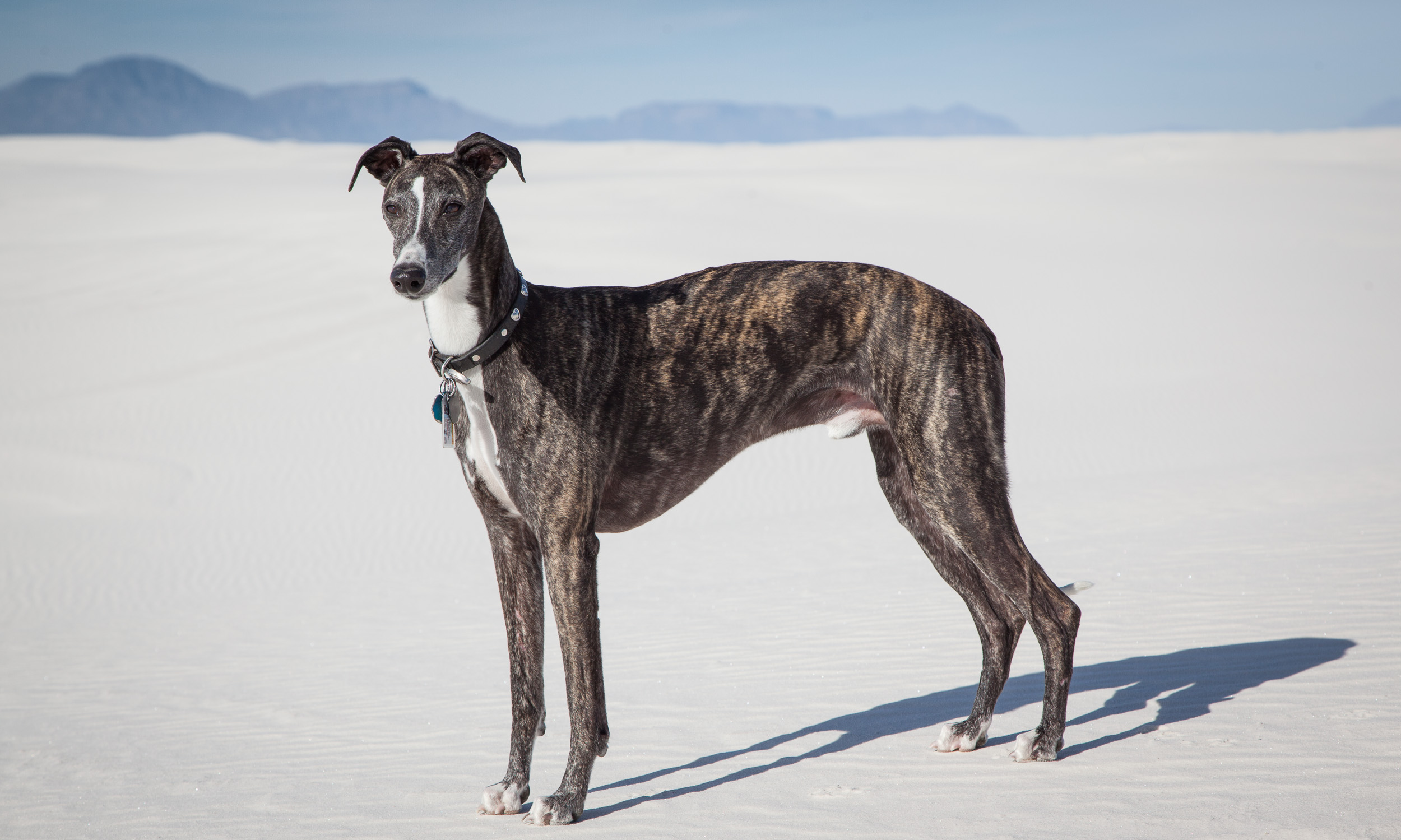 white sands with dogs author rodney andrew