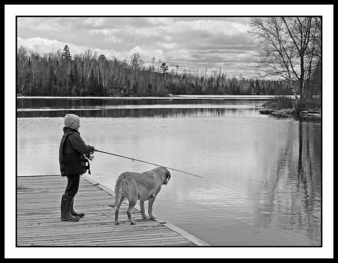 a boy and his dog author pluskwik paul