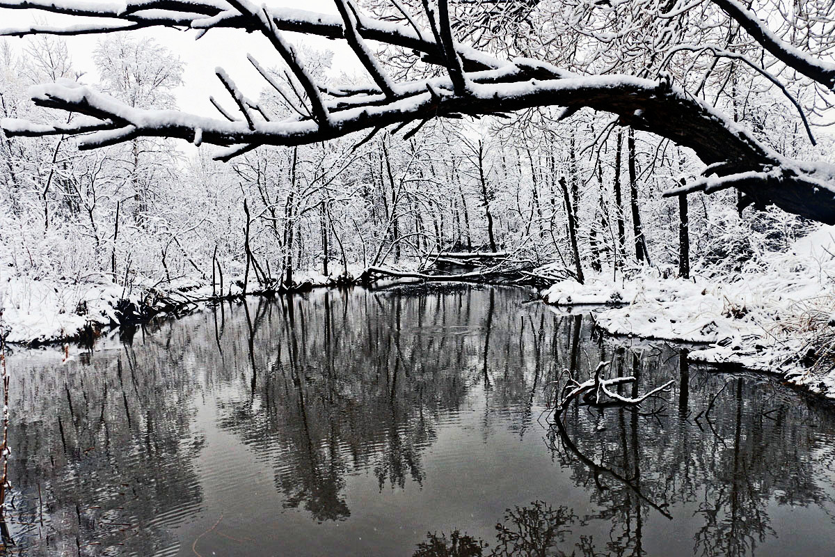 spring snow along the creek author pluskwik paul