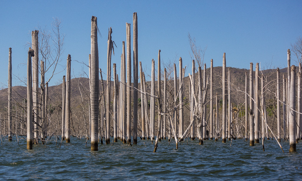 rising waters of lago enriquillo enlarge author downs jim