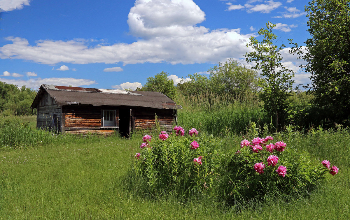 flowers in full bloom at the old homestead author pluskwik paul