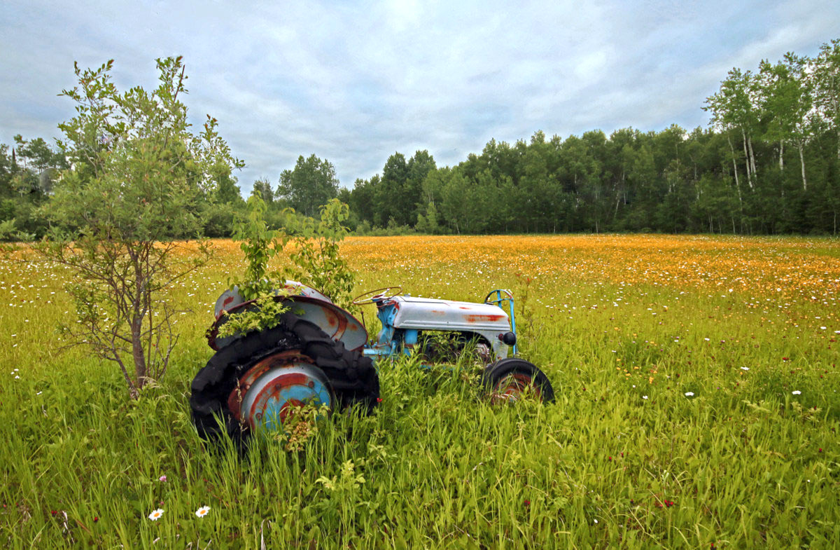 old tractor in the wild flowers author pluskwik p paul