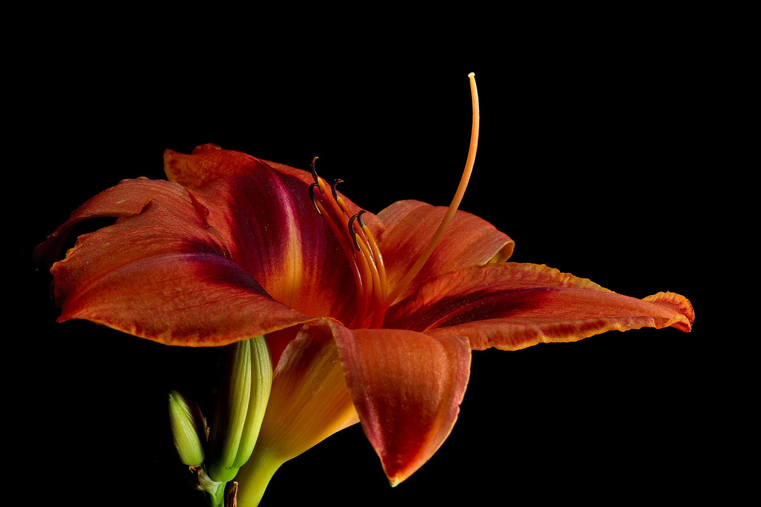 peachy lily img aw author sava gregory and verena