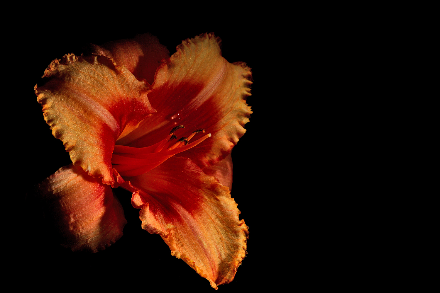 peachy frilly lily img aw author sava gregory and verena