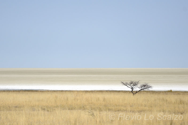 landscape etosha national park namibia author lo scalzo flavio