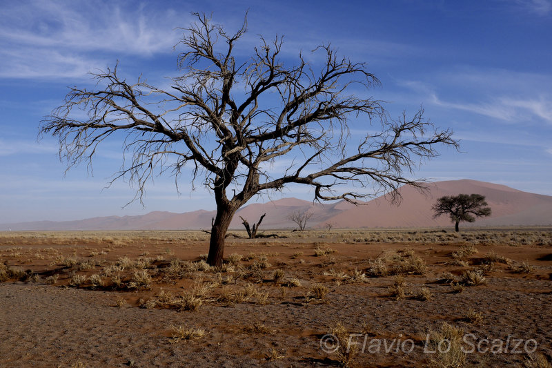 namib naukluft national park namibia author lo sc scalzo flavio