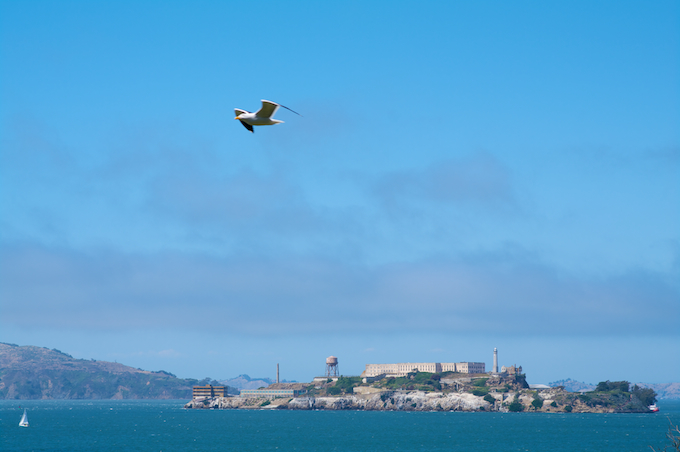 freedom flying over alcatraz author rivoal flor florian