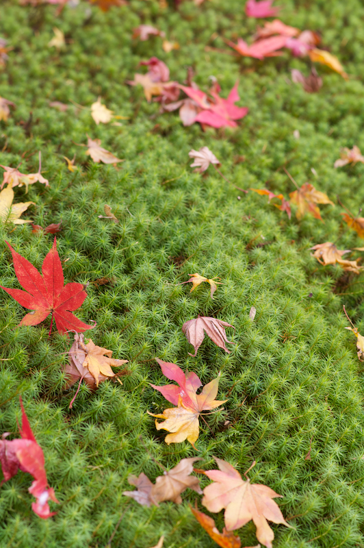 leaves on moss author rivoal florian