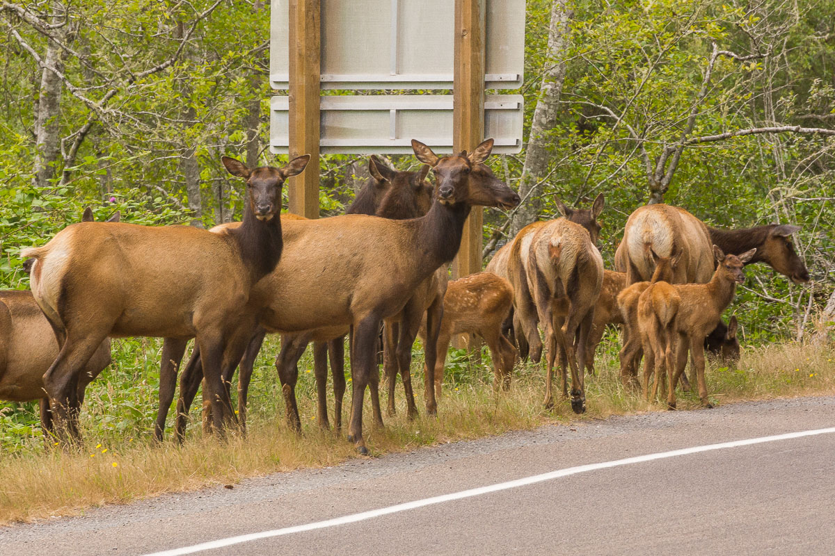 elk crossing enlargeable author downs jim