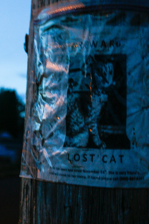lost cat author patterson steve