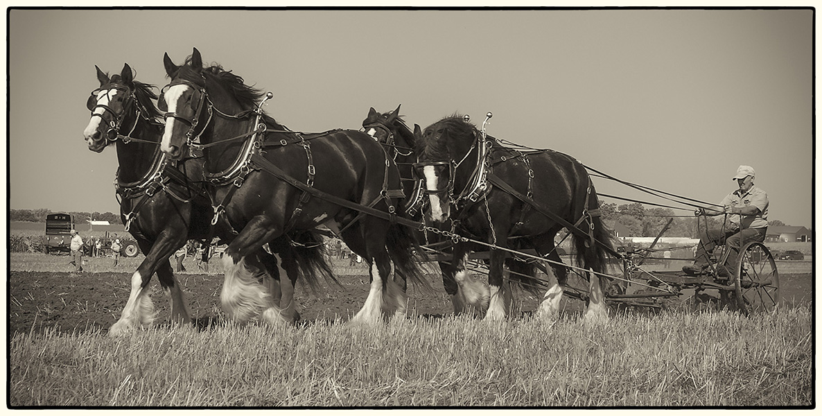 four horse hitch plowing author wilbrecht jon