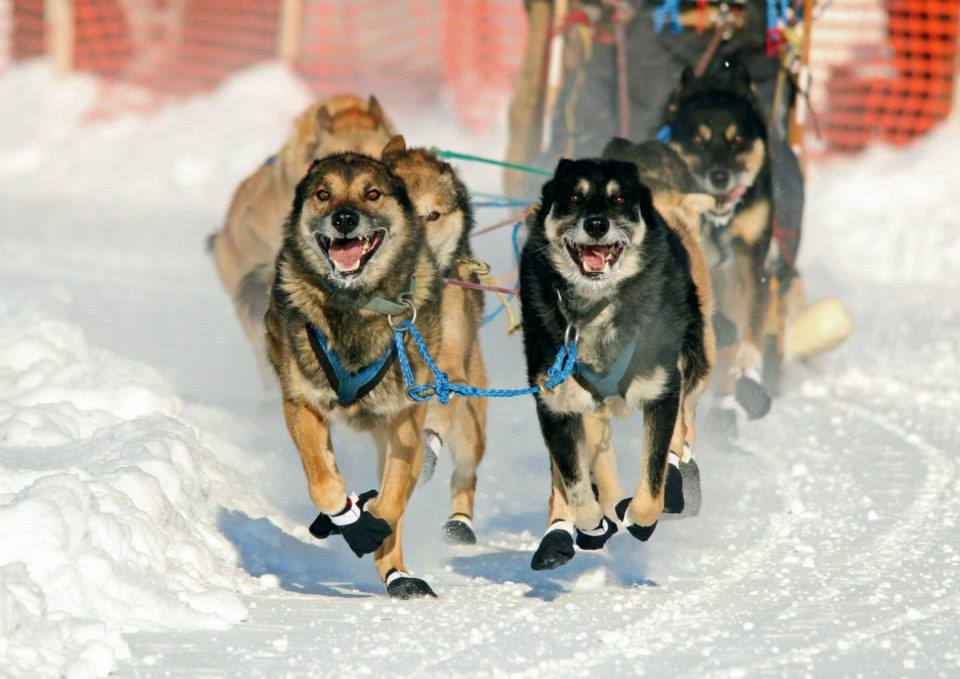 ready to run the sled dog race author pluskwik pa paul