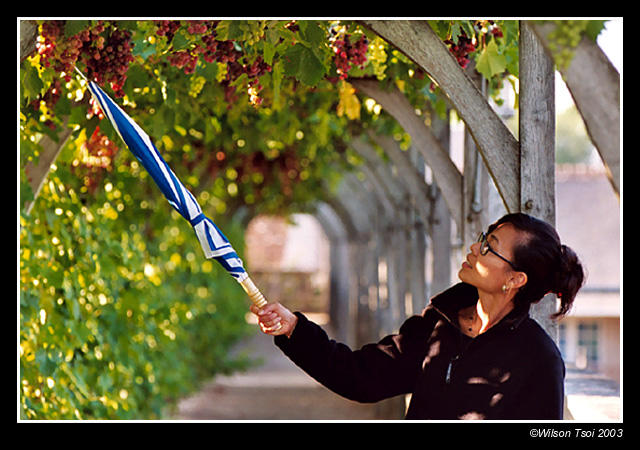 grapes and mary poppins author tsoi wilson
