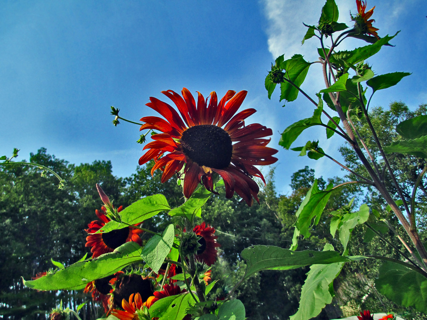 reaching for the sky img aw author sava gregory a and verena