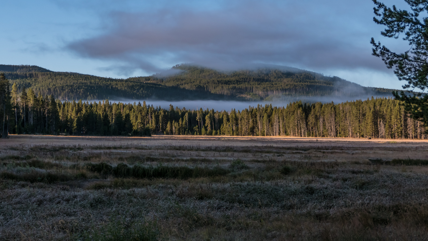 dawn at norris campground yellowstone np author y yin tom