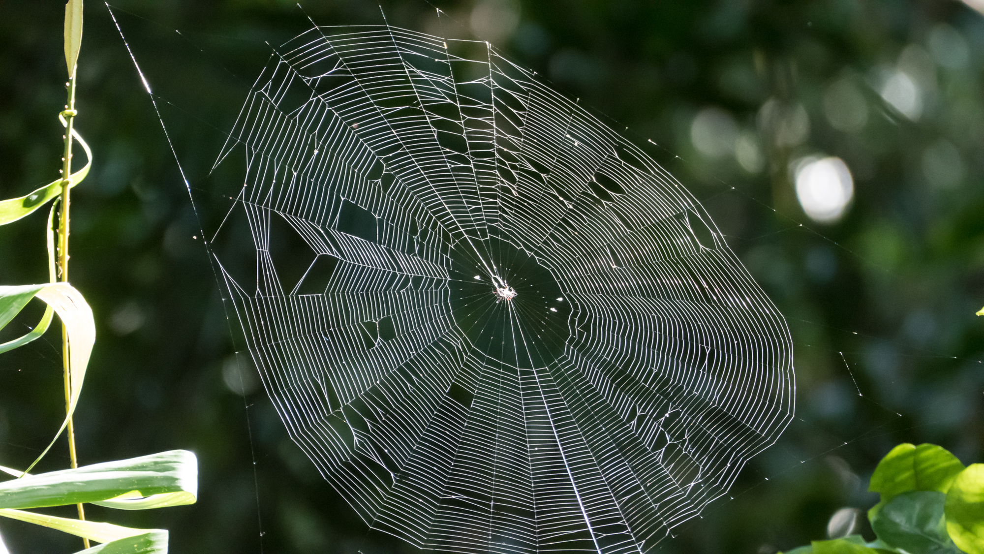 spider web high in the rainforest author yin tom
