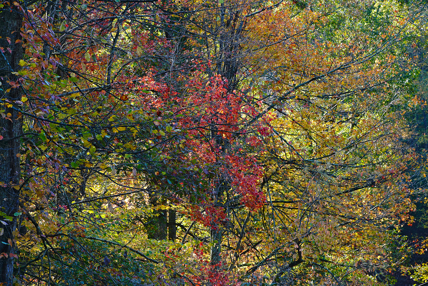 fall begins author sava gregory and verena thank