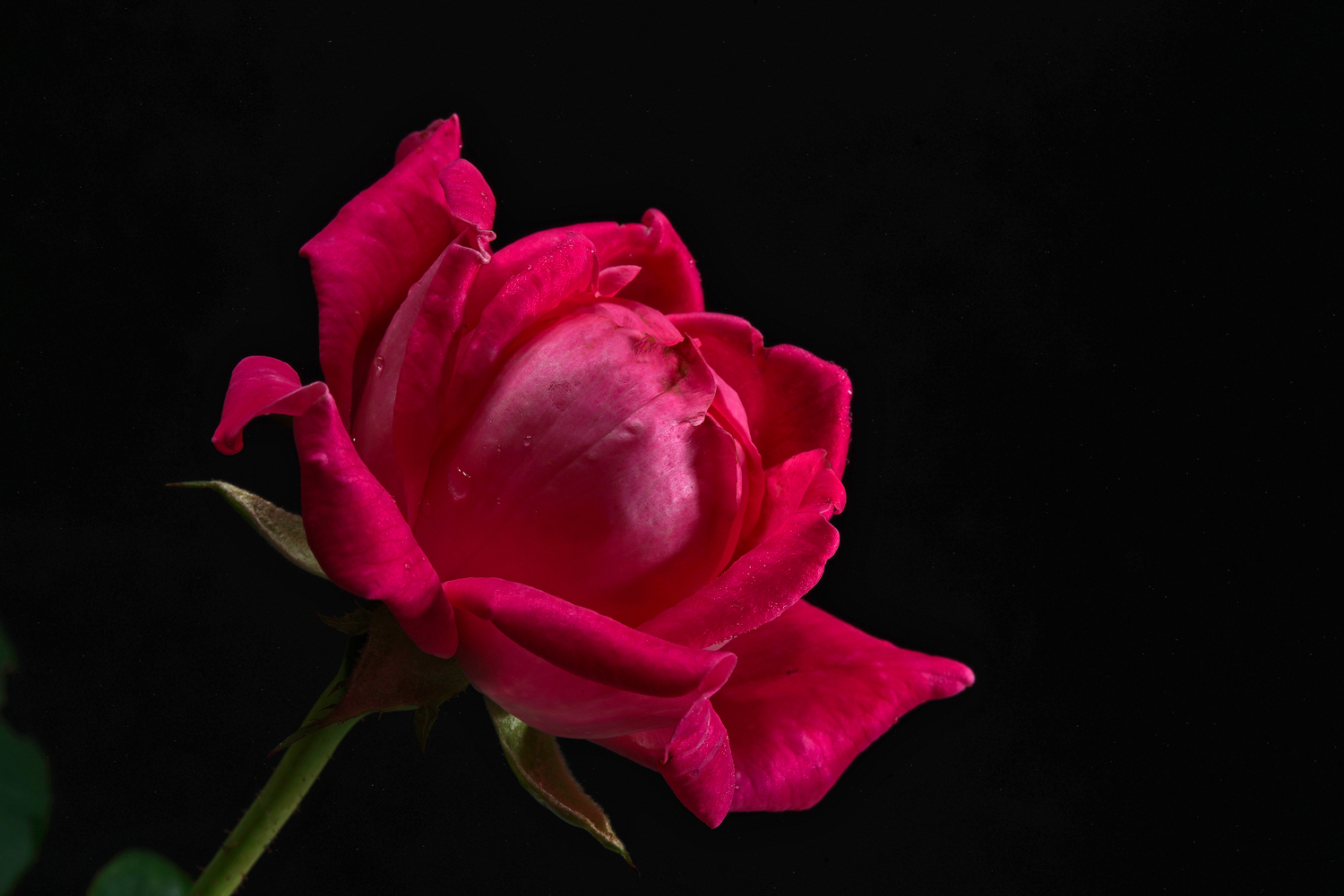 just a rose author sava gregory and verena thank