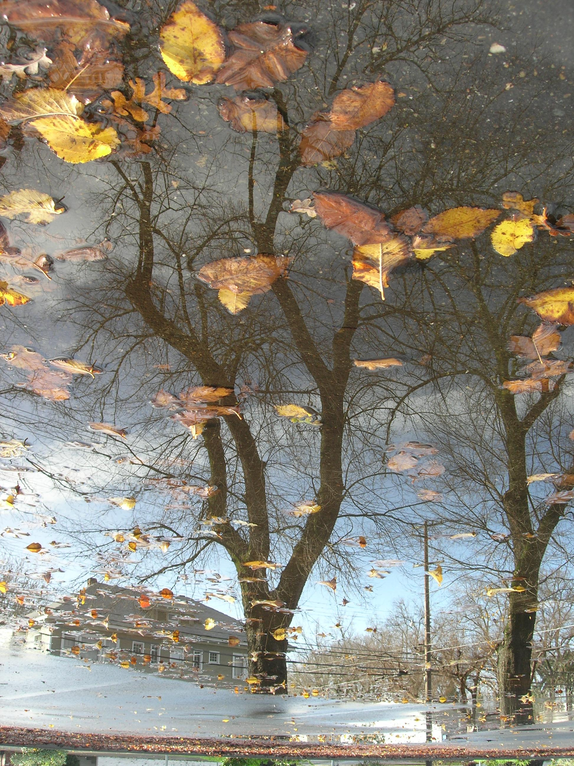 parking lot tree reflection with yellow leaves au dreizler bob