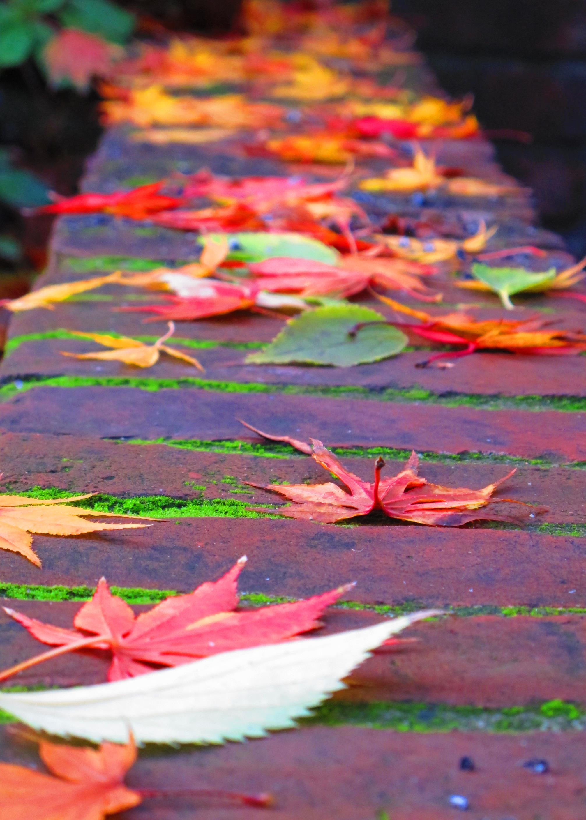 fall leaves in weatherstone patio author dreizler bob
