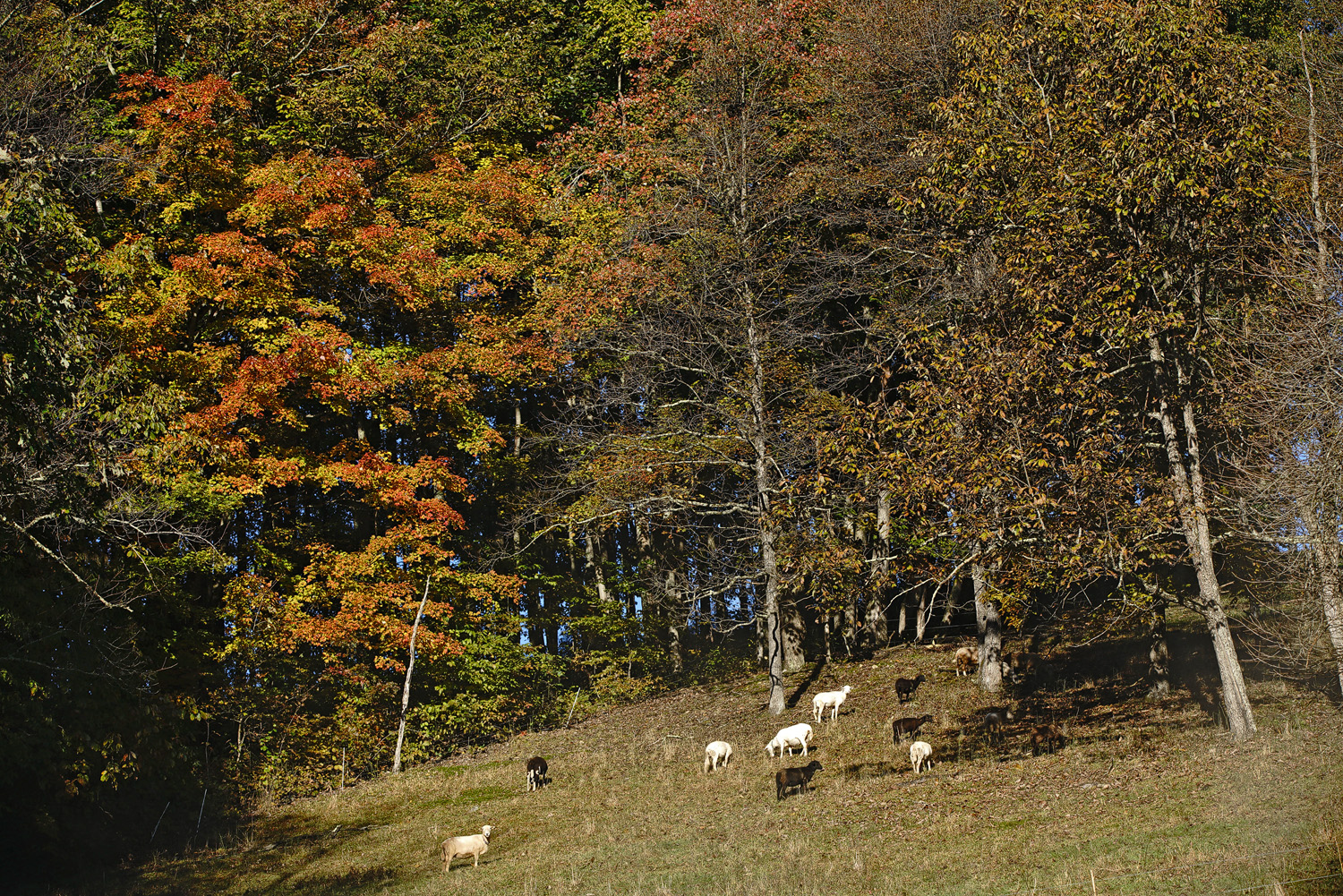 fall pasture with a view author sava gregory and verena