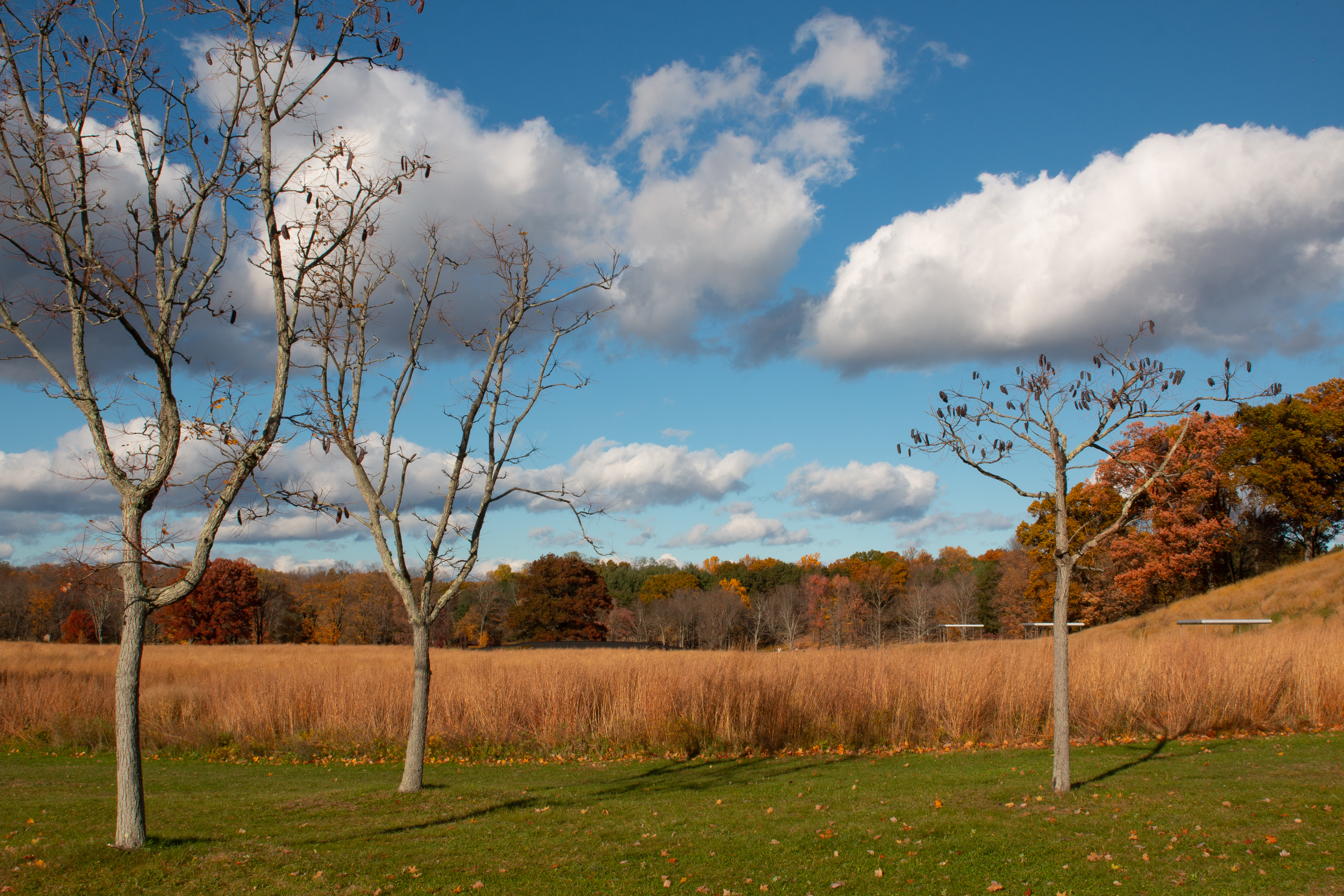 fall at storm king author belikoff alexander