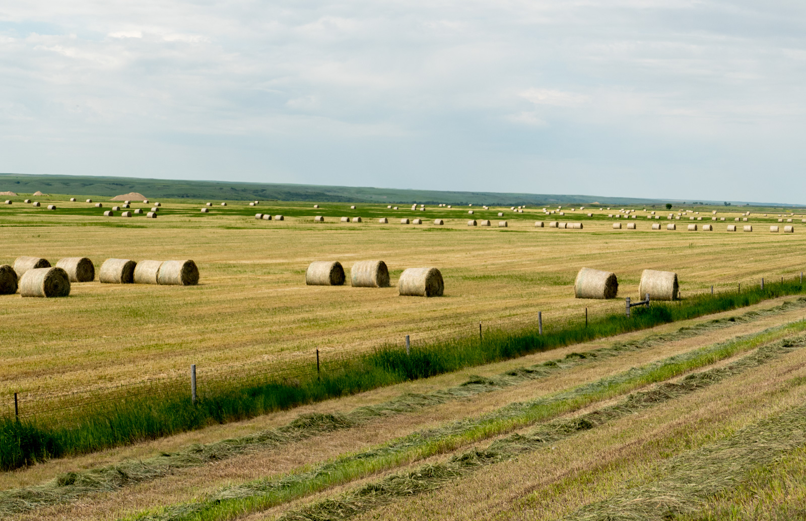 making hay on the plains author yin tom while