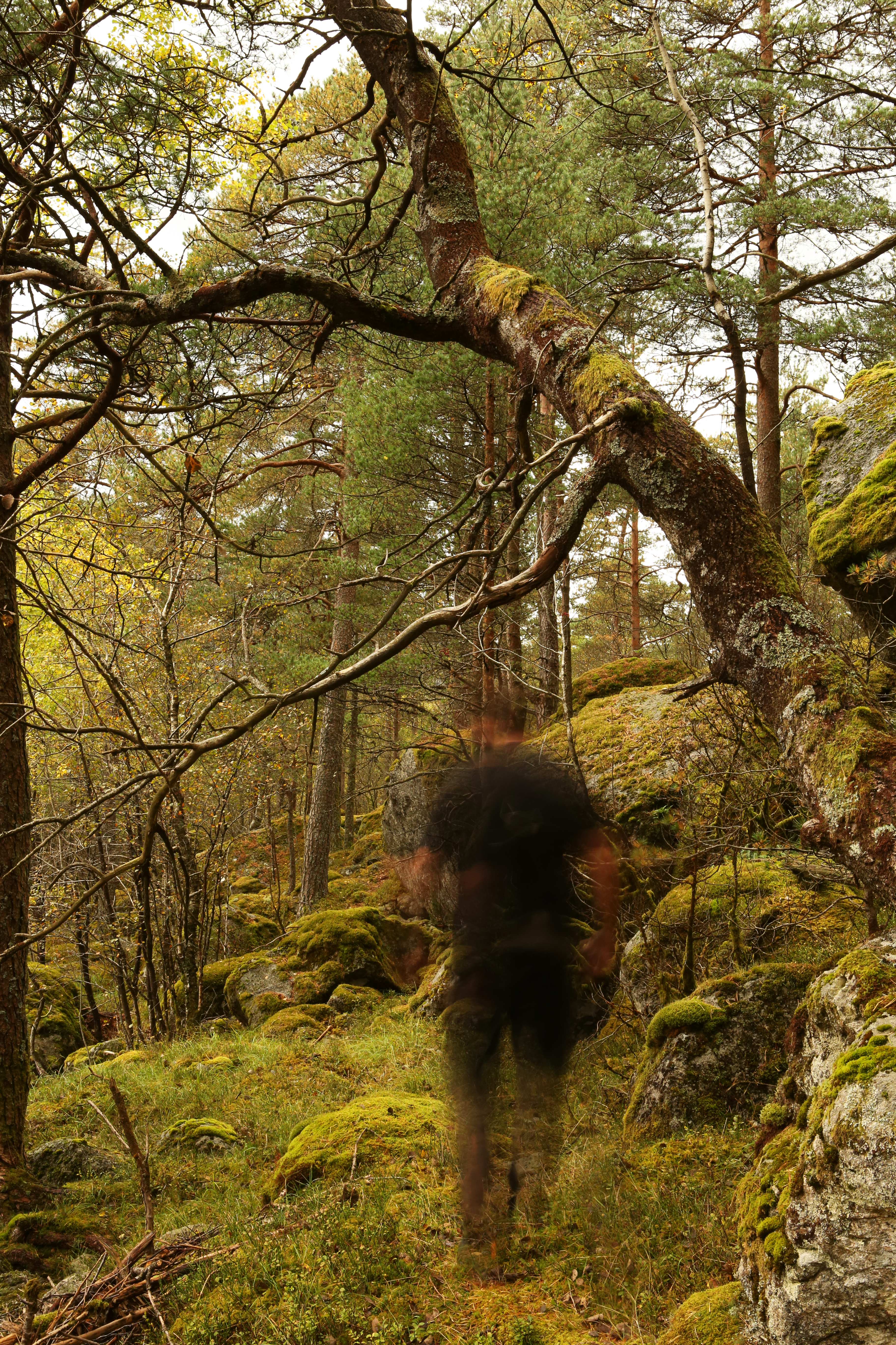 forest ghost author thomsen thor roadtrip hiking