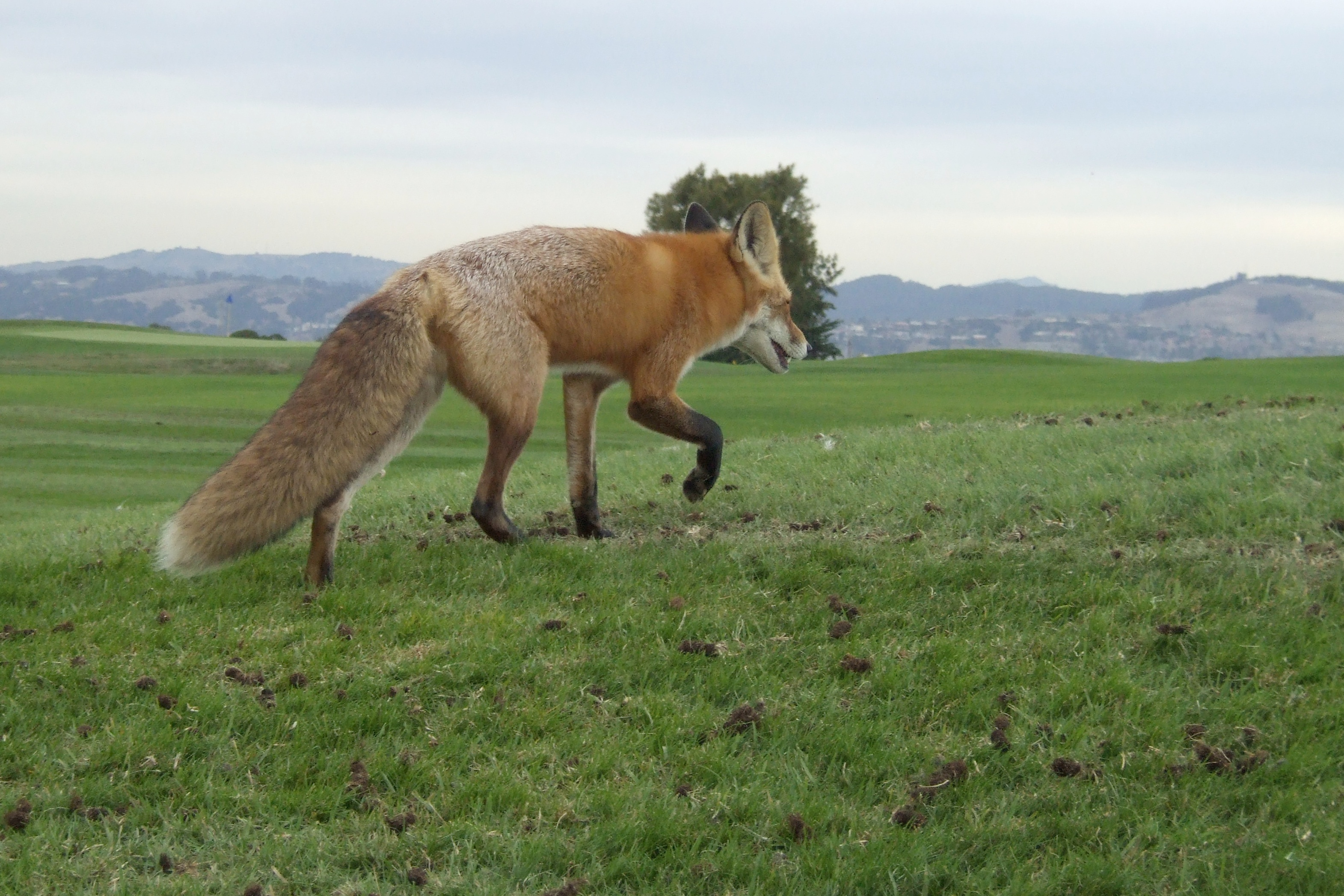 fox at monarch bay author lucke charlie love the