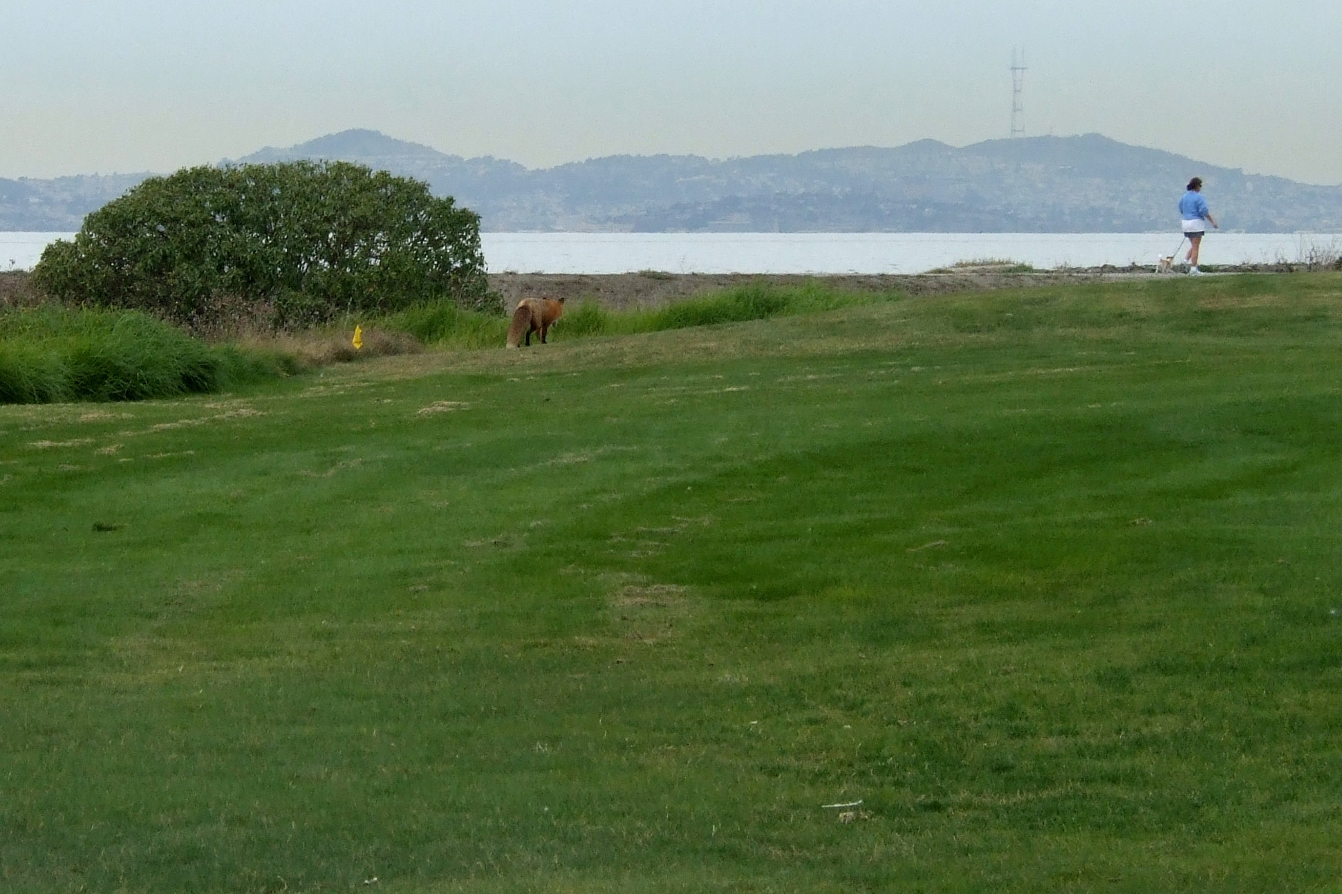 fox at monarch bay author lucke charlie it might
