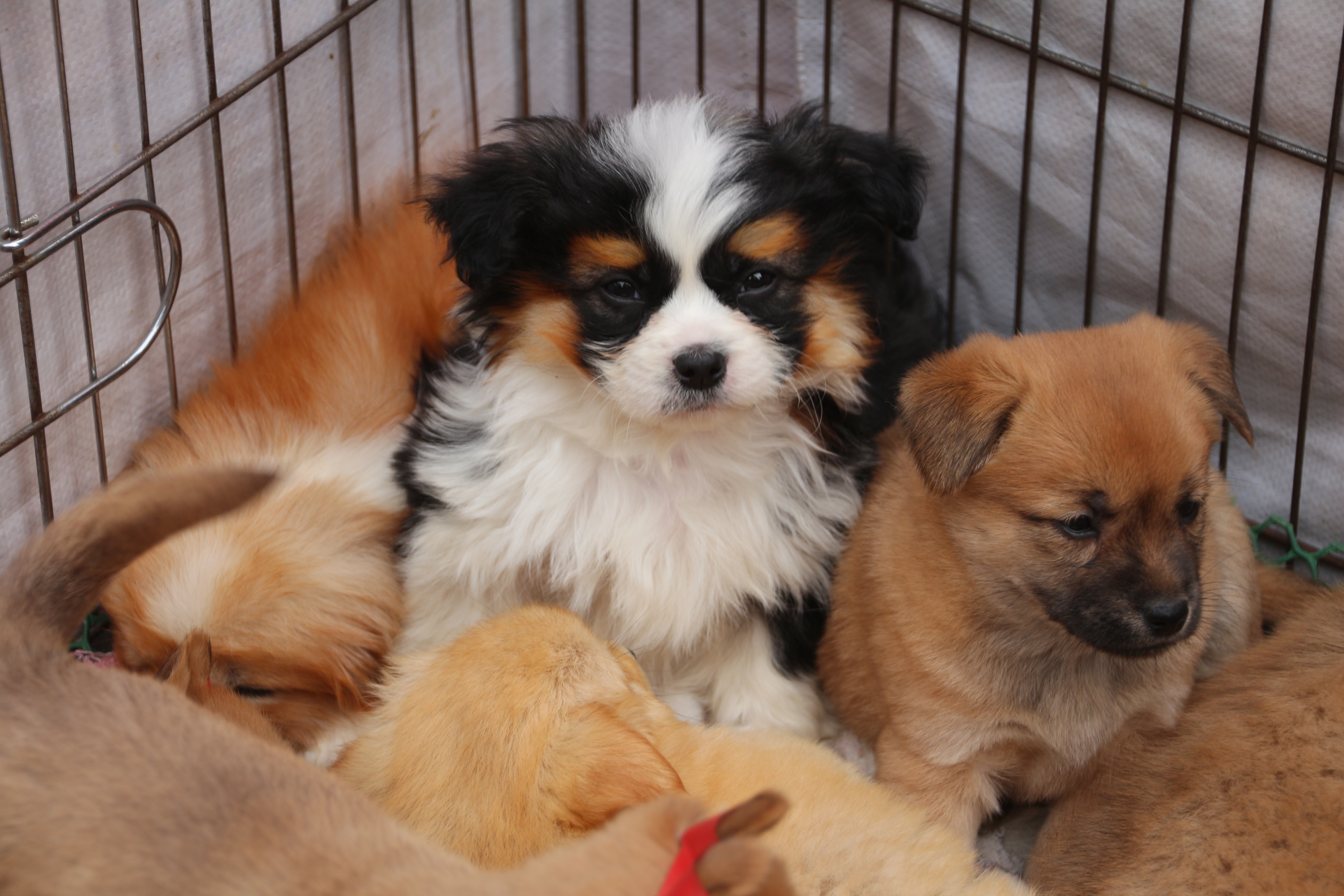 puppies for sale author lucke charlie not too lo