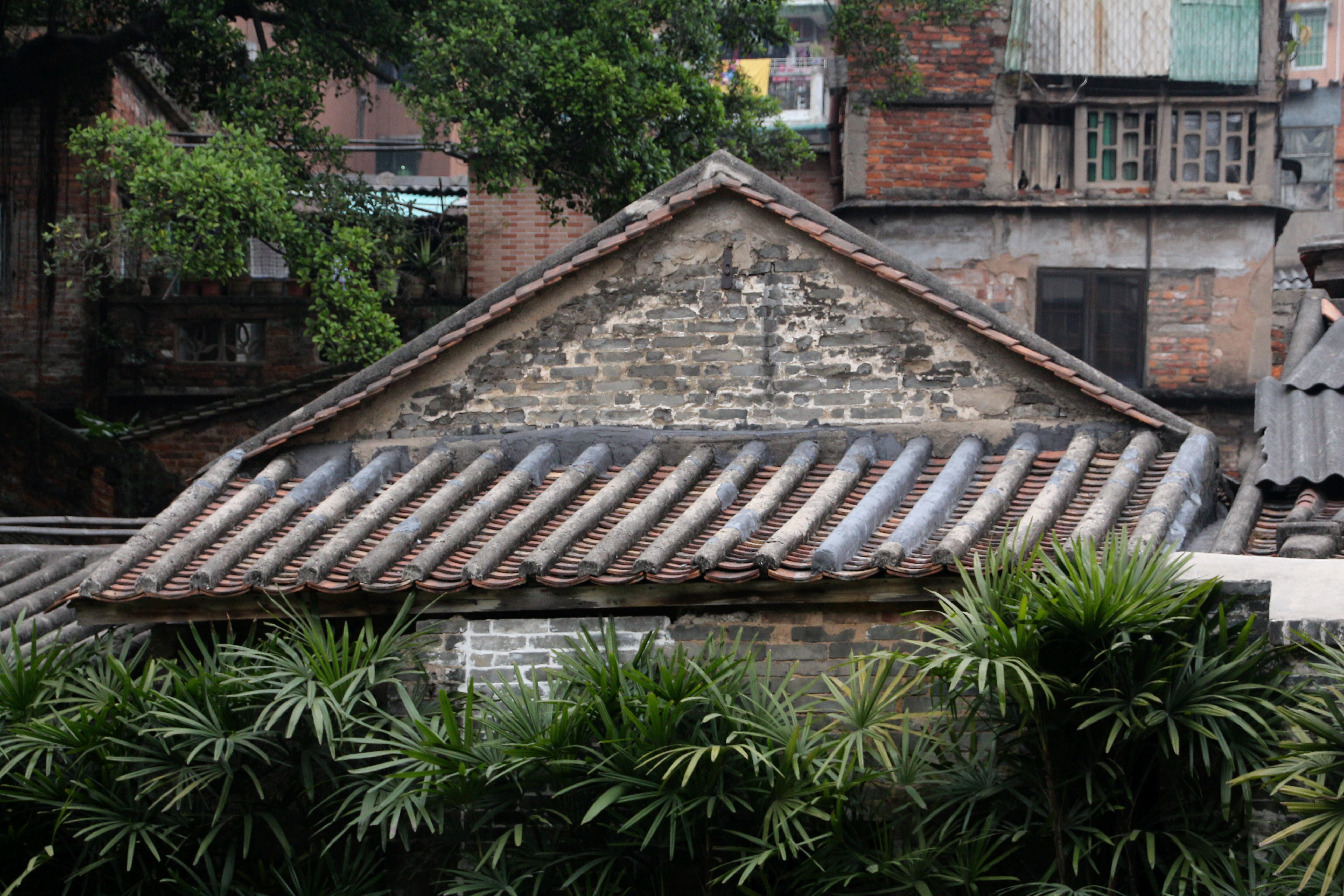old town guangzhou author lucke charlie mate