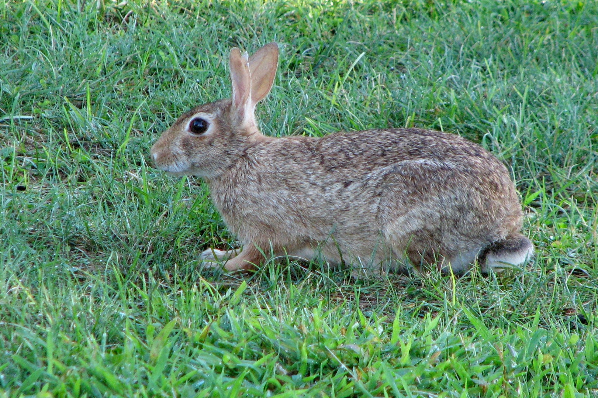 cottontail author lucke charlie held still for t