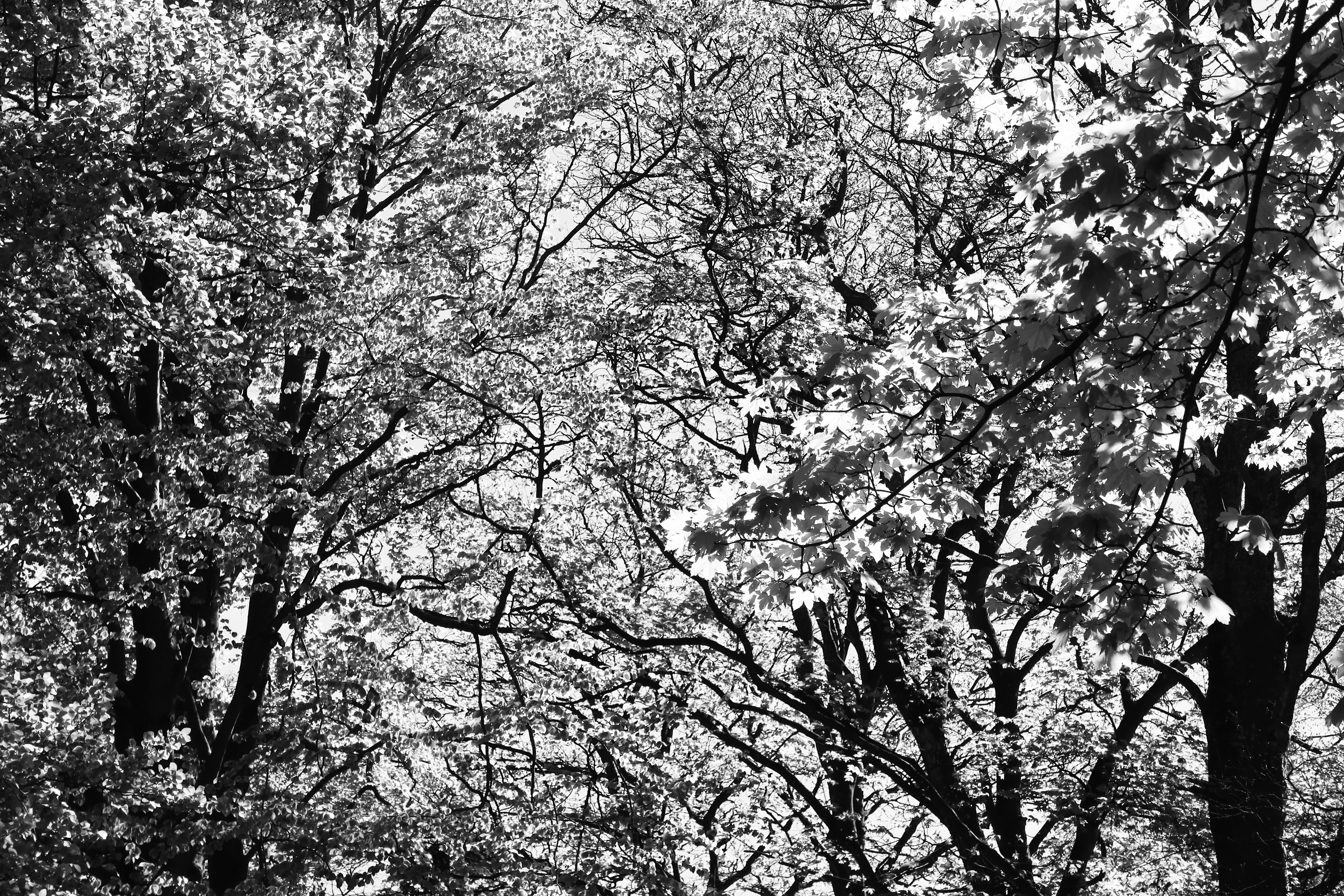 spring canopy author thomsen thor