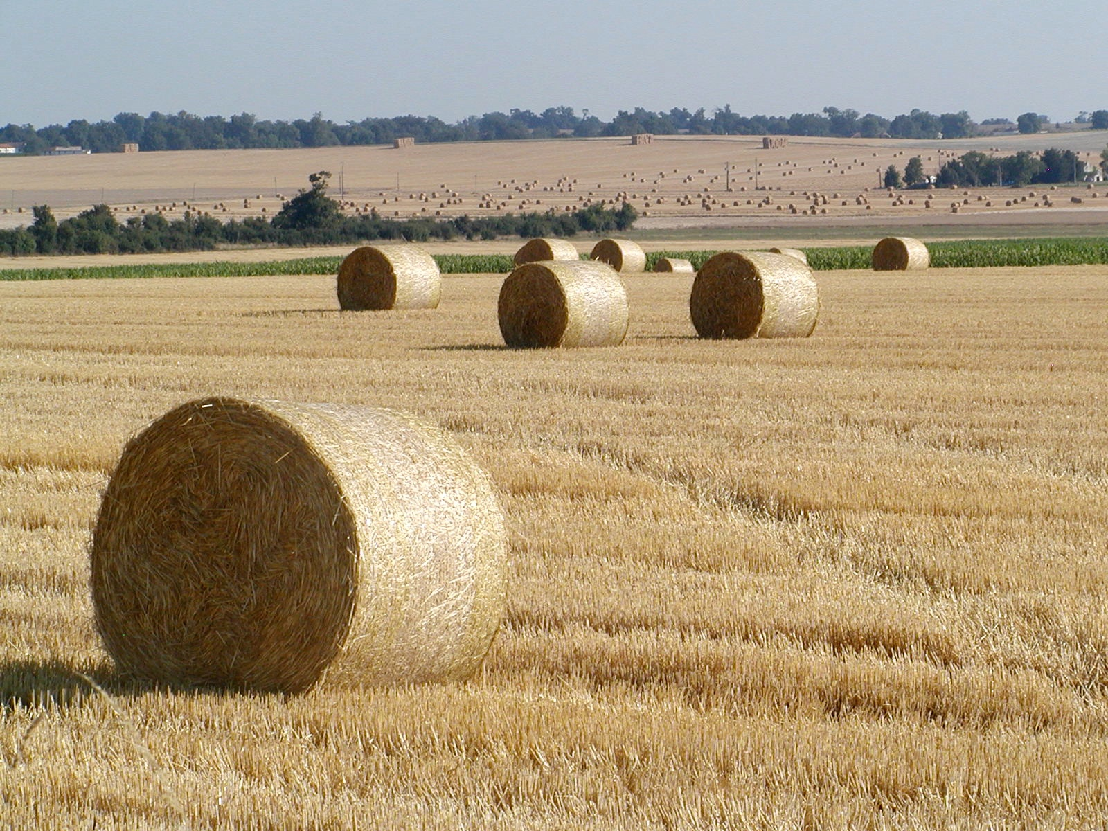 hay rolls author lucke charlie tightly and neatl