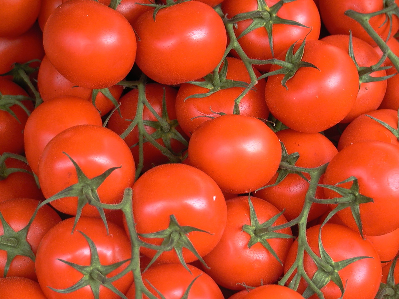 at the market author lucke charlie tomatoes on t