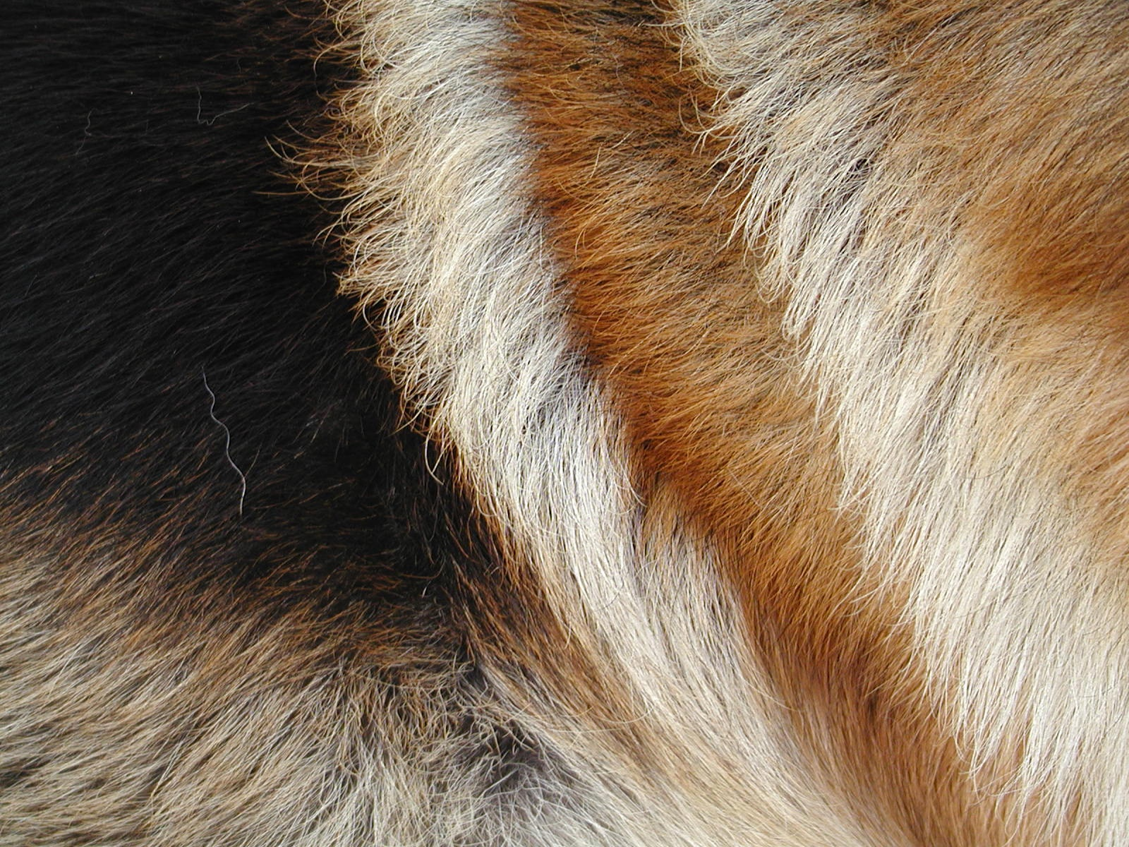 beautiful fur author lucke charlie i liked the c