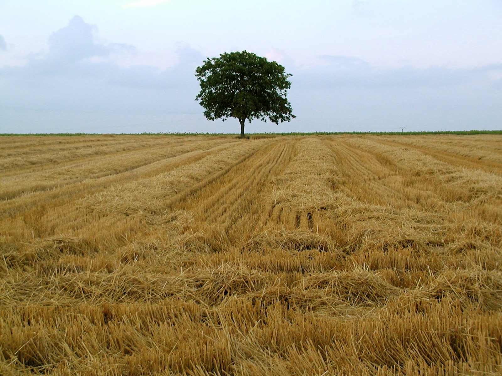 lone tree author lucke charlie at the edge of a