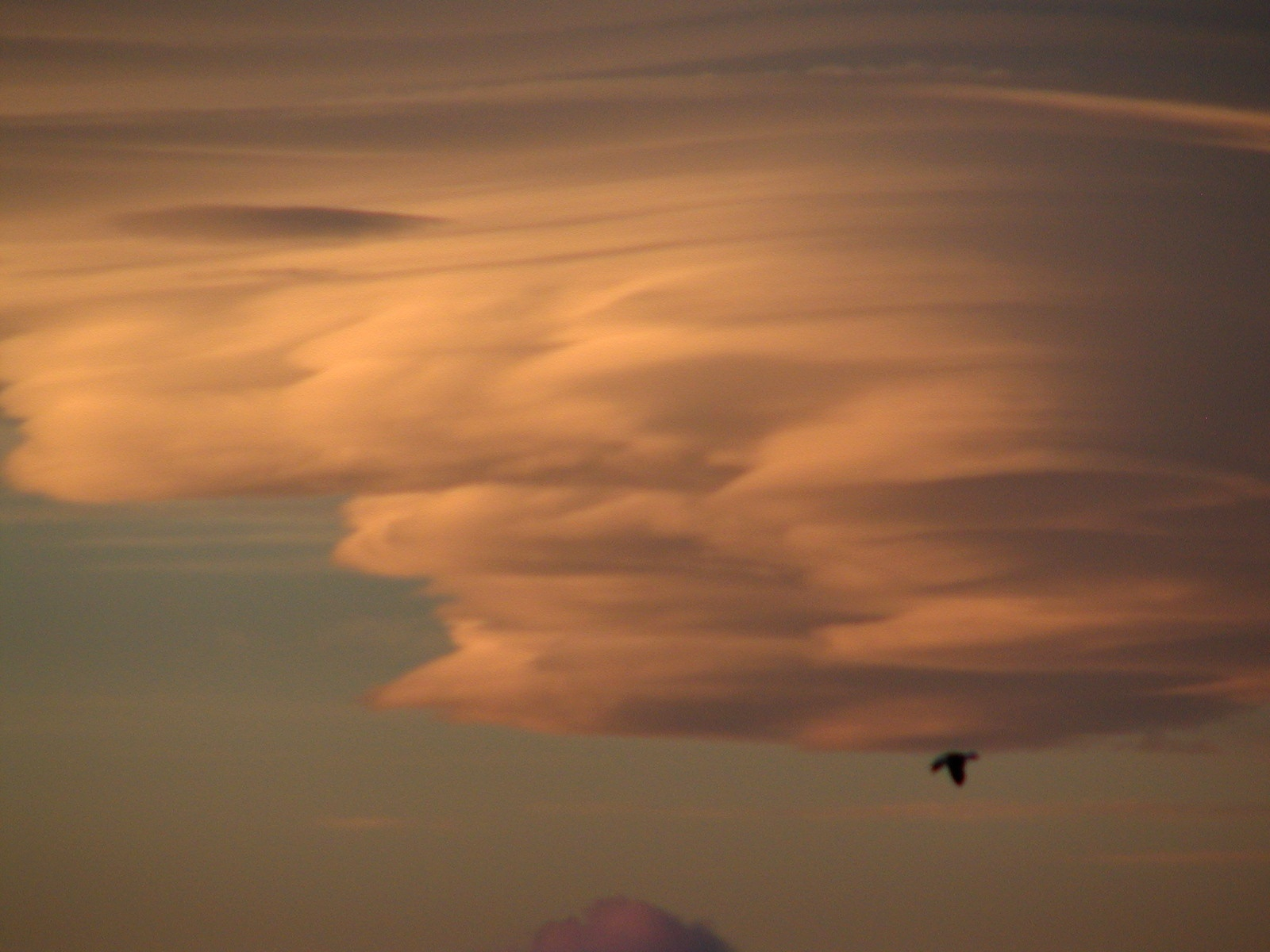 lenticular clouds author lucke charlie