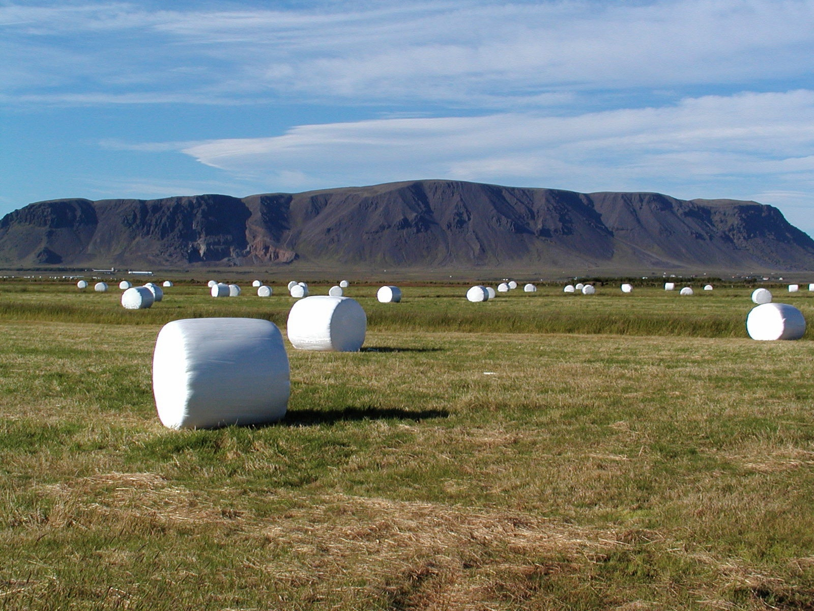marshmallow hay bales author lucke charlie