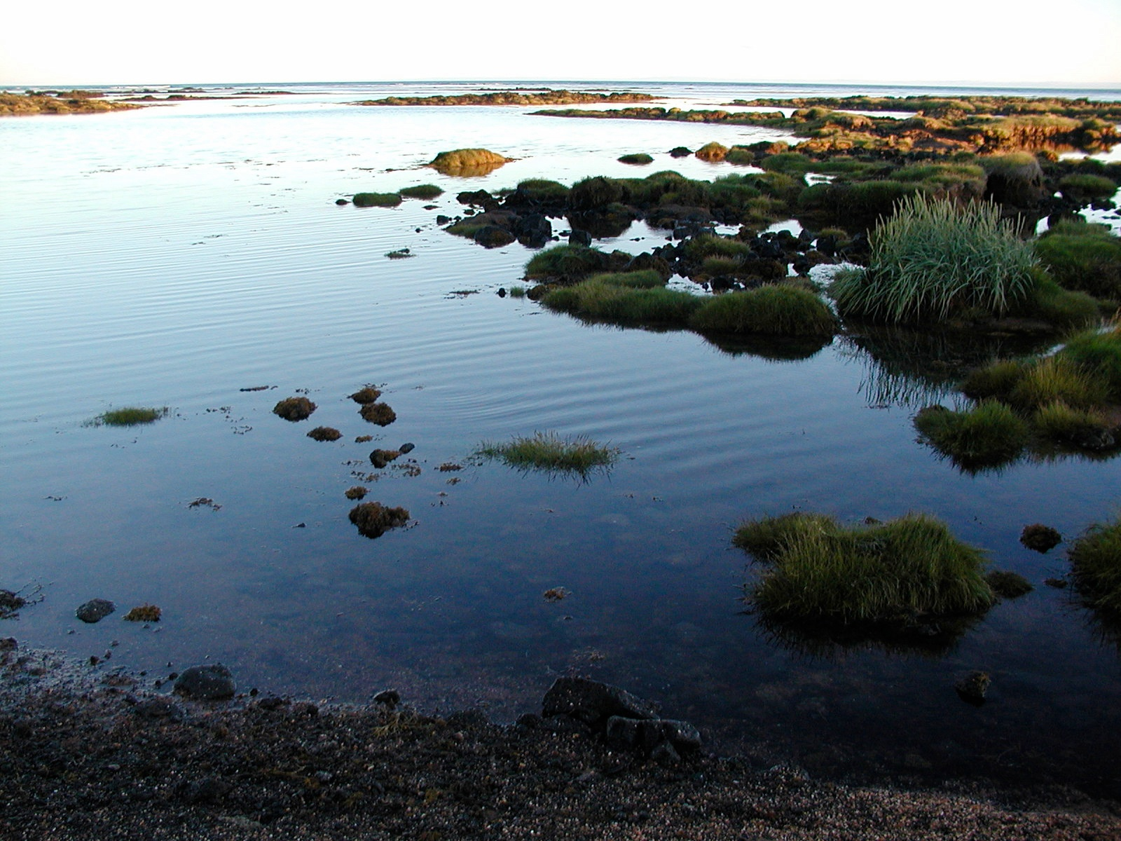 tide pools author lucke charlie