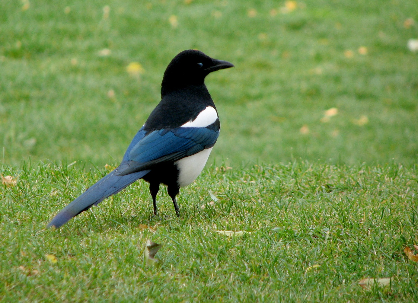 magpie author lucke charlie in a park anchora