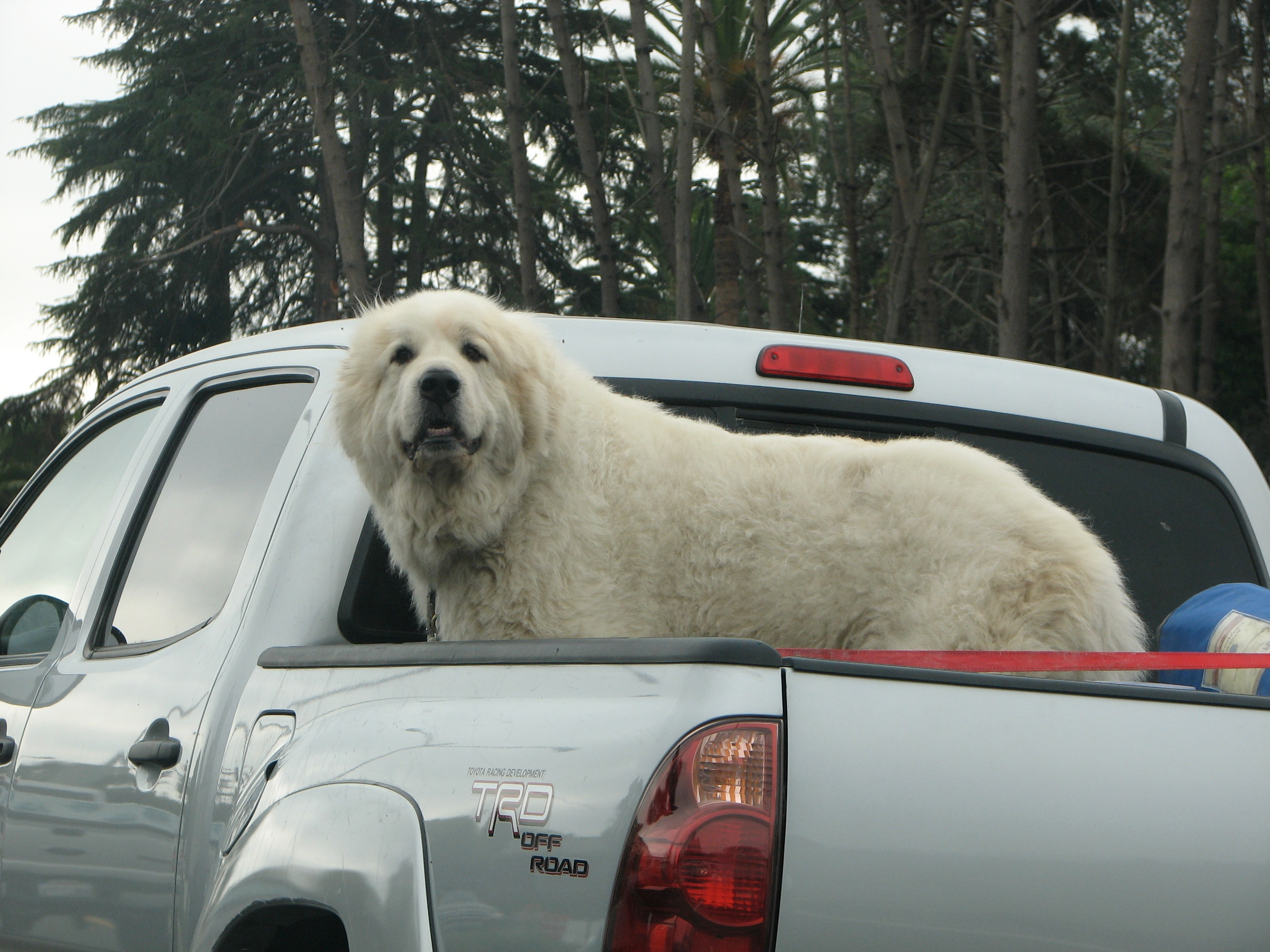 truck load of dog author lucke charlie