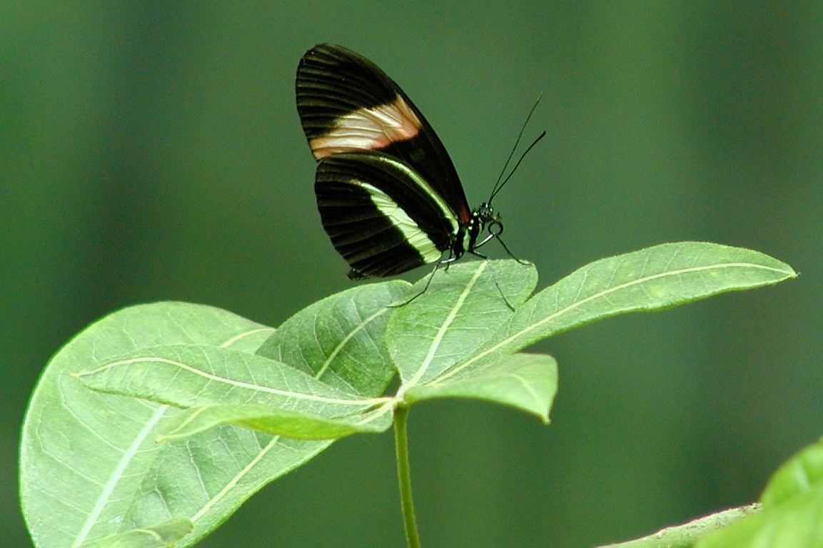 butterfly in captivity author lucke charlie