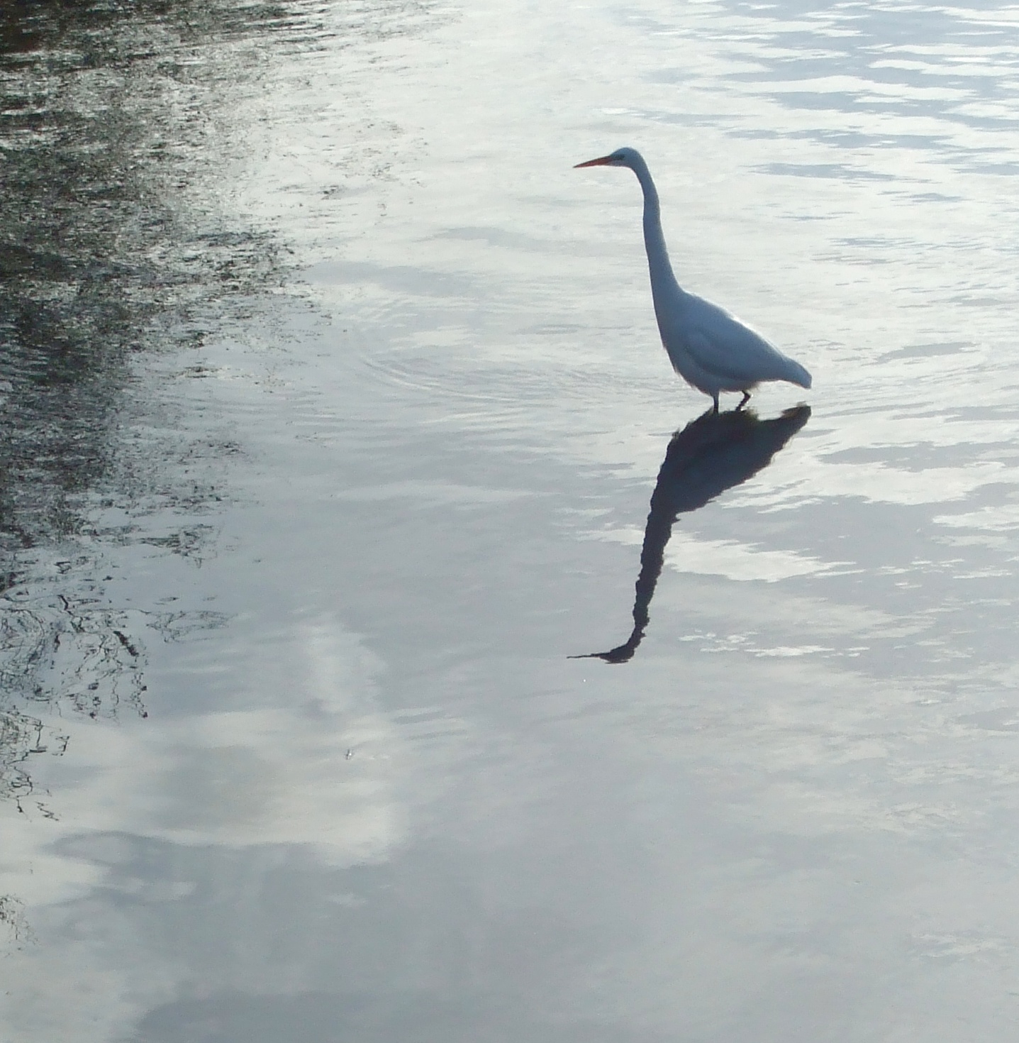 egret in the wetlands author lucke charlie