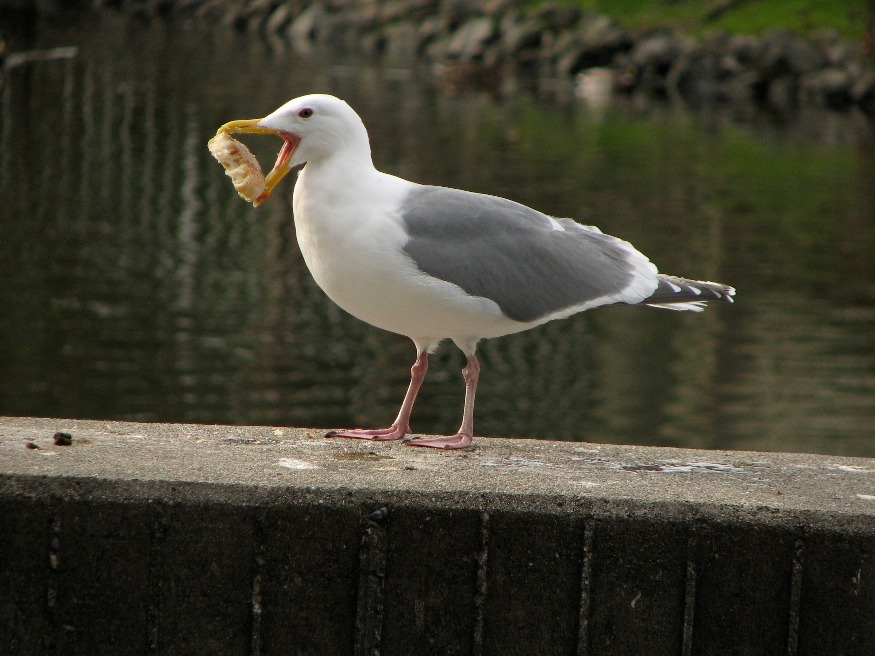 seagull and stale bread author lucke charlie